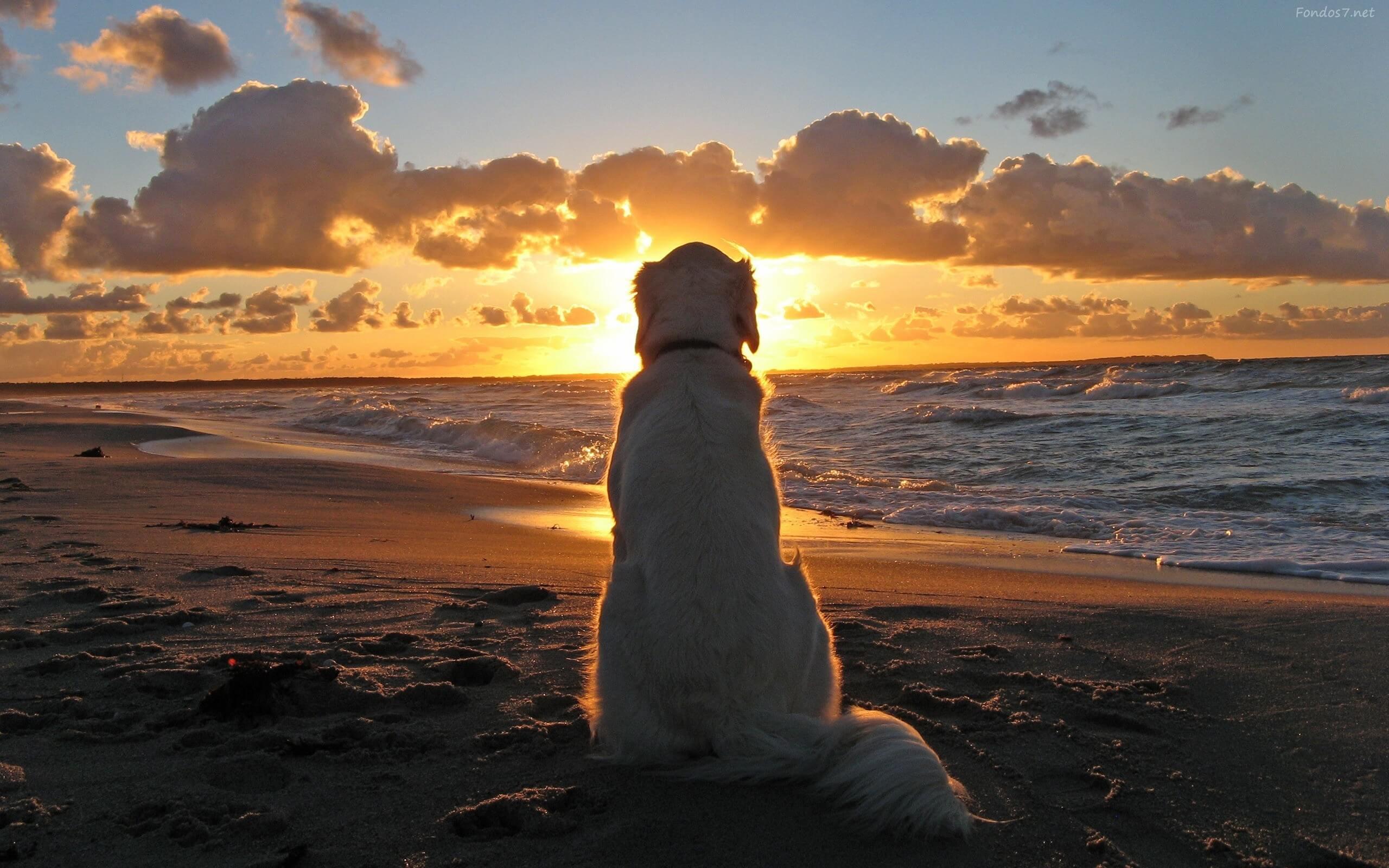 Perro mirando el Mar-AportAmor