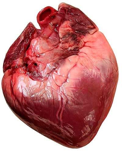 oda a mi corazon